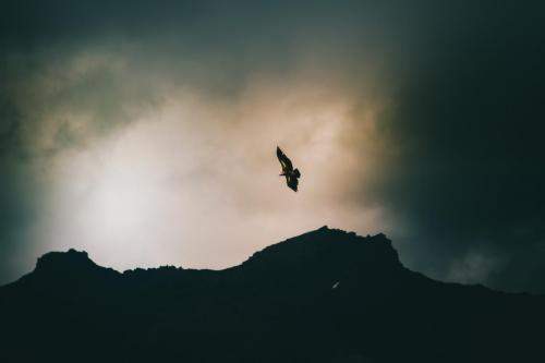 Eagle - China