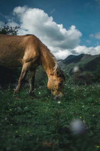 Horse - China