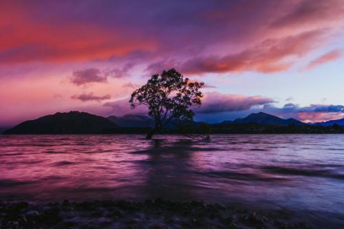 New Zealand 20